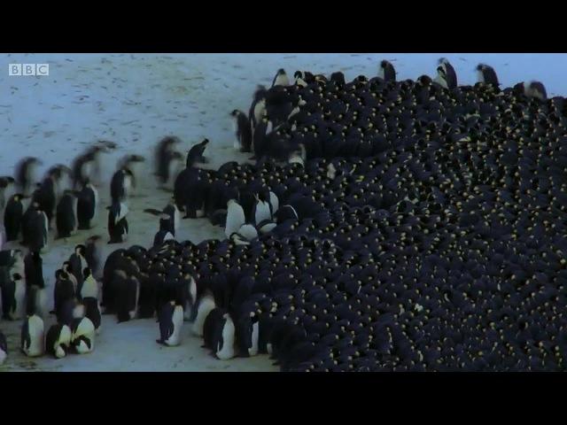Penguins Apocalypse · coub, коуб