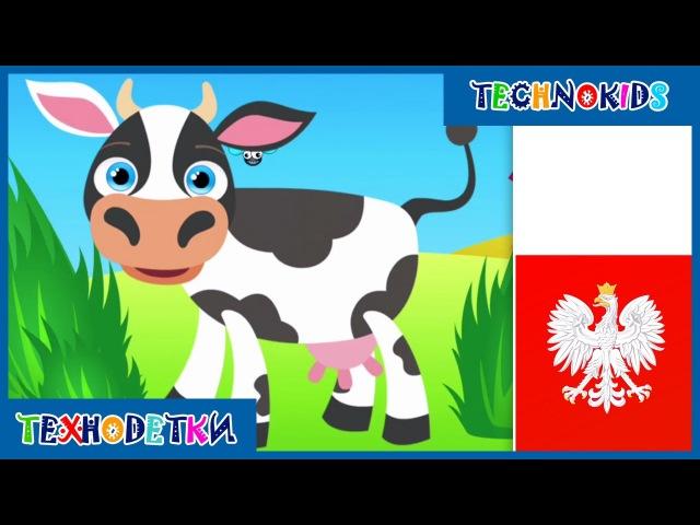 Польский для детей - Учим польский язык - Животные на польском - Учим польские слова для малышей