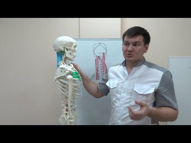 Упражнения на глубокие мышцы позвоночника. Exercises on the deep spine muscles