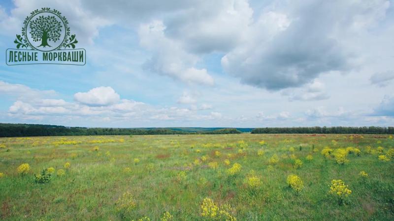 Лесные Моркваши - русское поле