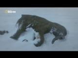 Waking the Baby Mammoth Пробуждение мамонтёнка