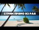 Стрим из тропического рая! + песни от стримера