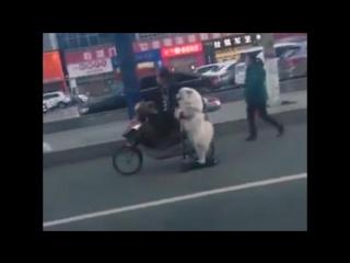 Собака-электросамокатака