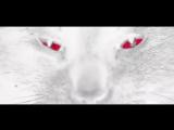 Cheb Khaled - Aicha(Alexander Holsten &amp Andrey Vertuga Remix)_Full-HD