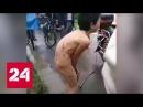 Китаец протащил сына голым по городу в наказание за кражу