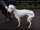 Спасли собаку от голодной жизни у водостоков Hath a dog from a hungry life of the gutters