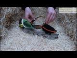 Fox Vario Sunglasses Polarisationsbrille Polbrille