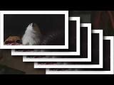 Gabe the dog MACINTOSH PLUS -