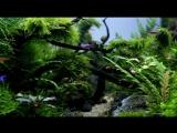 Aquascape Naturalman Aquarium Design 2014