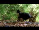 BBC Эти загадочные животные 03. Удивительные способы размножения