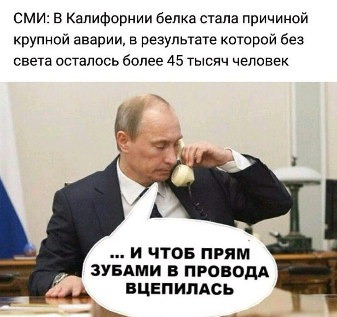 Путин и белка