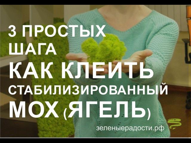 Мастер класс Декорирование стабилизированным мхом от зеленыерадости.рф