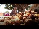 От Атласских гор до Лас Вегаса история косметики Марокко target