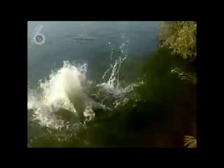 Чемпион мира по прыжкам в воду