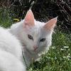 Кошки-потеряшки в добрые руки! г. Челябинск