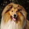 Собаки-потеряшки в добрые руки! г. Челябинск