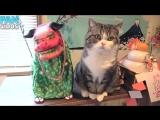 Приколы с котами смешные коты смешные кошки приколы коты приколы про кошек про котов с кошками кот