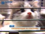 Спецоперация по спасению животных