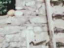 «Каникулы Петрова и Васечкина, обыкновенные и невероятные» 1984