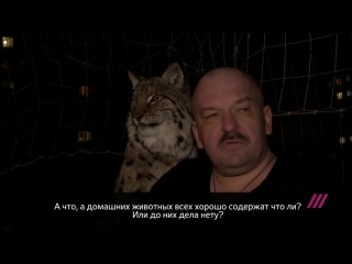 Владелец рыси против запрета держать дома диких животных