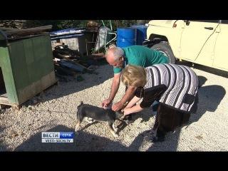 Вакцинация домашних животных: очагов бешенства в Сочи не зафиксировано