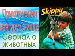 Приключения кенгуру Скиппи 1 серия. Браконьеры