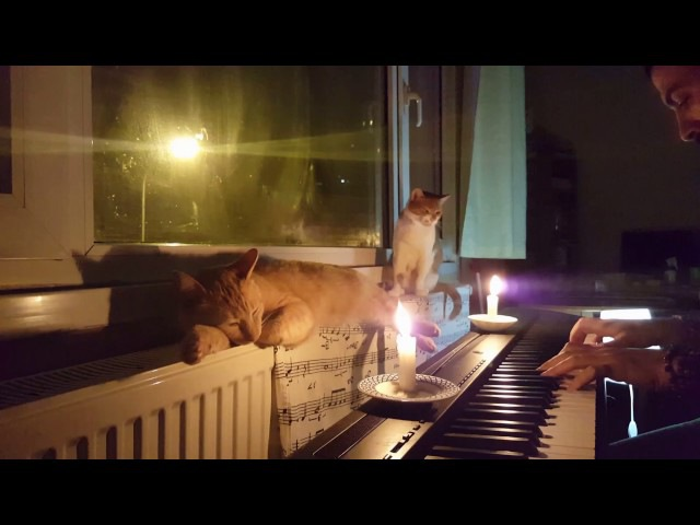 Peaceful Night With Cats