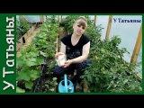 СОДА - спасатель вашего огорода! Пищевая сода - подкормка для огурцов, томатов и других растений