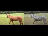 Turning a horse video into a zebra video (by CycleGAN)