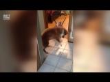 Собака очень смешно учит ребенка прыгать.