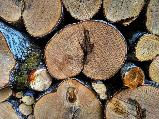 Деревянная жопа