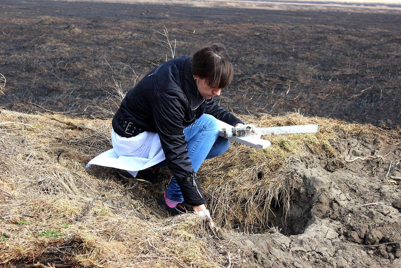 В Ростовской области лис, волков и шакалов накормили вакциной против бешенства