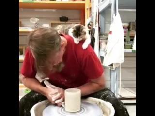 Когда вы с котом не разлей вода