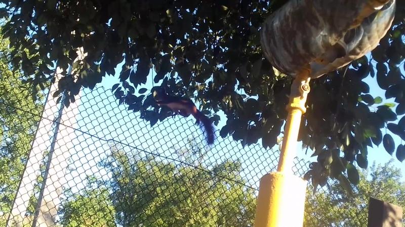 Білочка сердиться, що я побачила, як вона йде у сосідній сад за горішками