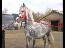 Лошади цыганского барона-1