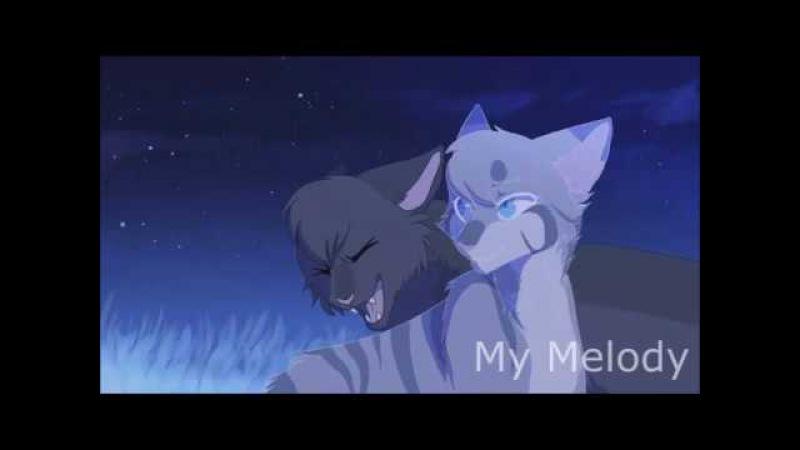 Коты Воители Миру Мир
