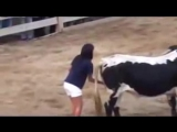 Девушка знает как усмирить быка_low