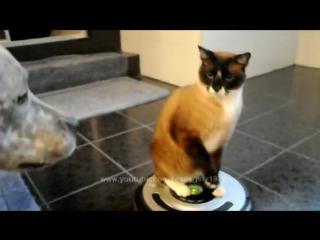 Кот вооружился роботом-пылесосом и атакует собаку