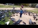 02.09.2015 голуби (2)