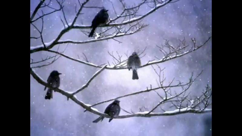 11. Сальваторе Адамо - Падает снег (Водолей)