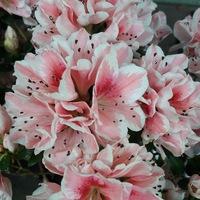 Комнатные цветы тюмень