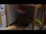 Кот одел на голову Катину сумочку