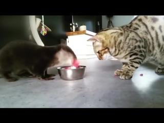 Необычная дружба котейки и выдры