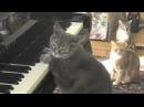 Кошка Нора играет на фортепиано