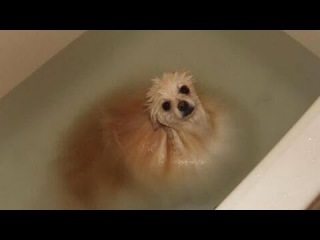 Dogs Just Don't Want to Bath 2015 [HD]