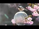 A. Vivaldi: Ottone in villa (RV 729) - II/XI Aria [Caio]: Io sembro appunto / J. Lezhneva