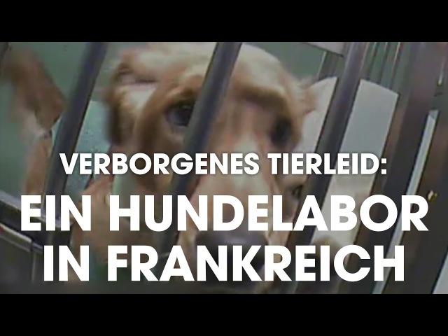 Verborgenes Tierleid: Ein Hundelabor in Frankreich