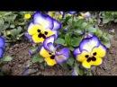 Медитация Цветы. Упражнение на релаксацию «Рождение цветка».