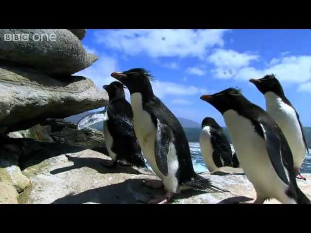 Rockhopper Penguins Hop to the Top - Penguins: Spy in the Huddle - Episode 1 Preview - BBC One