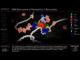 DNA Replication Animation 3D Molecular Biology